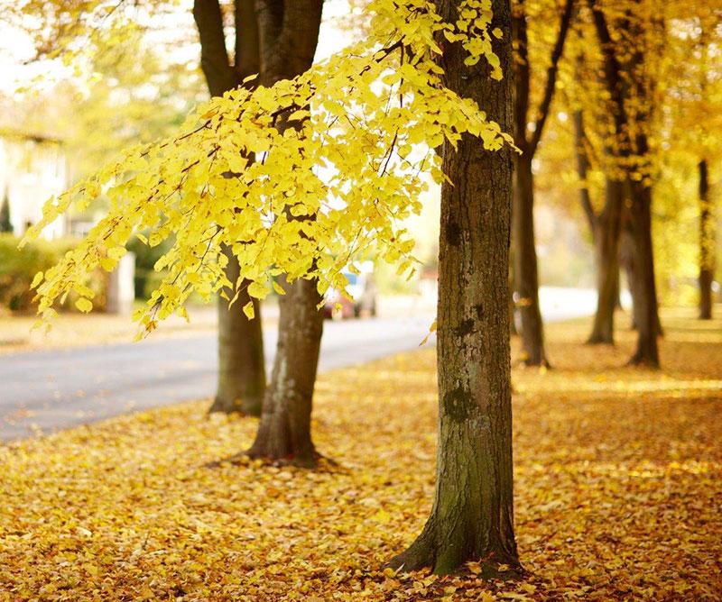 C'est bientôt l'automne !